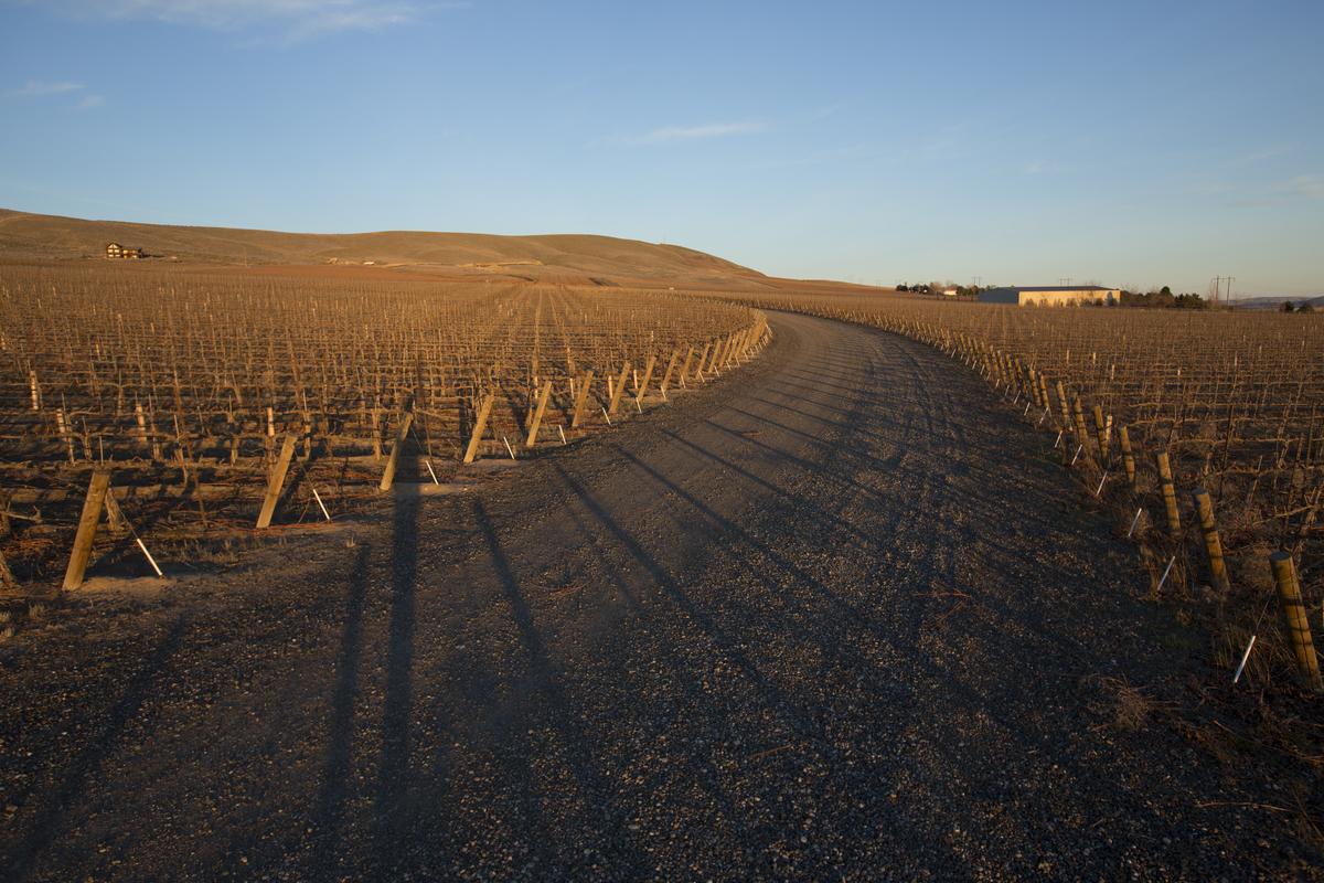 Obelisco Estate Vineyard Trimming