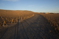 Obelisco Estate Vineyard Trimming