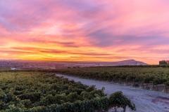 Obelisco Vineyard at Sunset